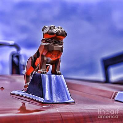 Mack The Bulldog Mascot Poster by Paul Ward