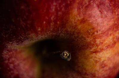 Poster featuring the photograph Macro Apple by Erin Kohlenberg