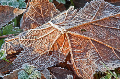 Macro Nature Image Of Fallen Leaf With Frost Poster