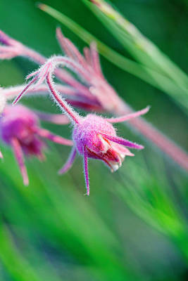 Macro Photo Of Prairie Flowers Poster by James White