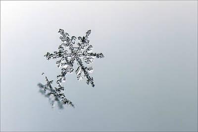 Macro Snowflake Poster