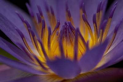 Macro Water Lilly Side View Poster by Bonita Hensley