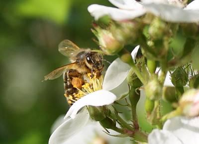 Mad Honeybee Poster