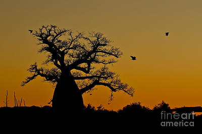 Madagascan Sunrise Poster by Ashley Vincent