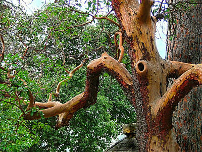 Poster featuring the photograph Madrone Character by Wendy McKennon