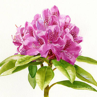Magenta Colored Rhododendron Square Design Poster by Sharon Freeman