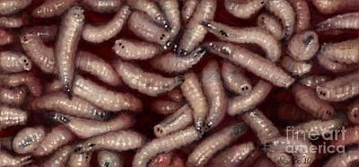 Maggots Poster