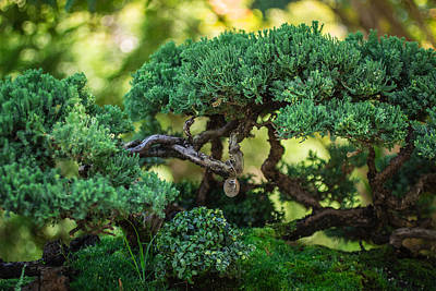 Poster featuring the photograph Magical Bonsai by Julie Andel