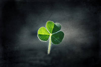 Magical Clover Poster by Melanie Lankford Photography