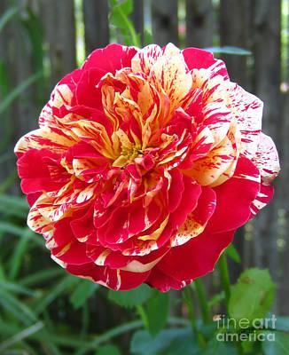Magical Rose Poster