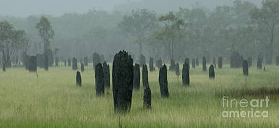 Magnetic Termite Mounds Poster