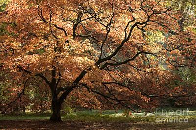 Magnificent Autumn Poster