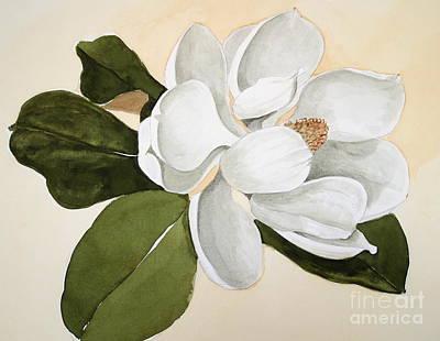 Magnolia Bloom Poster by Nancy Kane Chapman