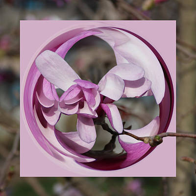 Poster featuring the photograph Magnolia Blossom Series 1301 by Jim Baker