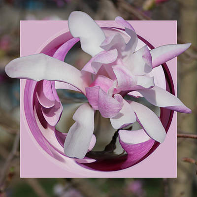 Poster featuring the photograph Magnolia Blossom Series 1302 by Jim Baker