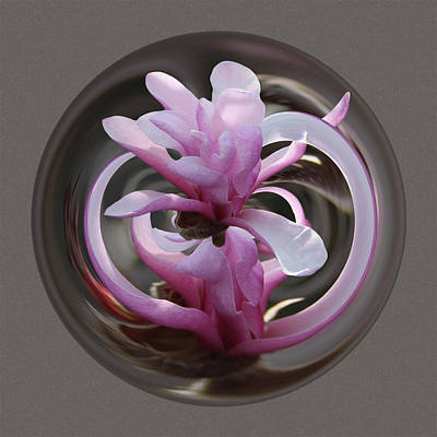 Poster featuring the photograph Magnolia Blossom Series 1306 by Jim Baker