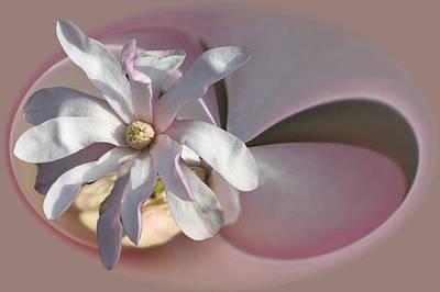 Magnolia Blossom Series 707 Poster