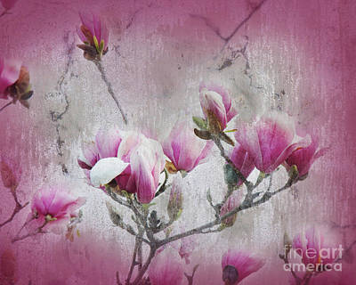 Magnolia Blossoms With Tinted Edge Poster by Andee Design