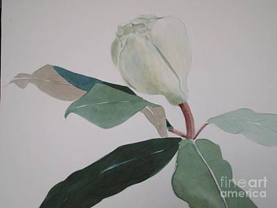 Magnolia Bud Poster by Nancy Kane Chapman