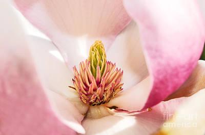 Magnolia Close Up Poster by Terry Elniski