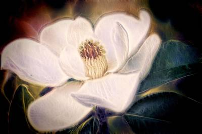 Poster featuring the photograph Magnolia Dream by Joetta West