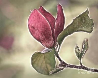 Magnolia Glow Poster by Susan Candelario