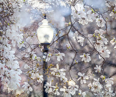 Magnolia Impression Blend Poster