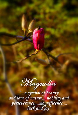 Magnolia Poster by Michele Embry