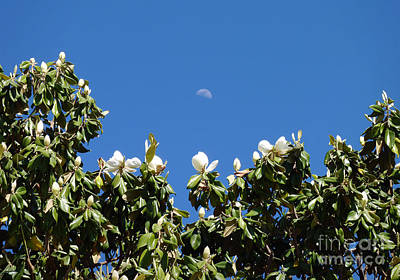 Poster featuring the photograph Magnolia Moon by Meghan at FireBonnet Art