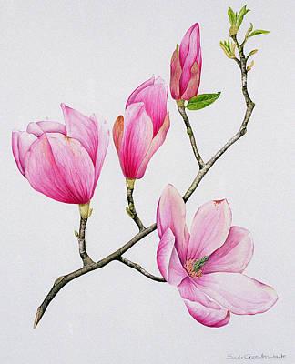 Magnolia Poster by Sally Crosthwaite