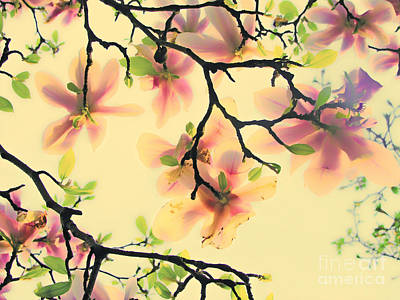 Magnoliart In Apricot And Light Green Poster