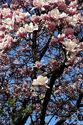 Magnolias Poster