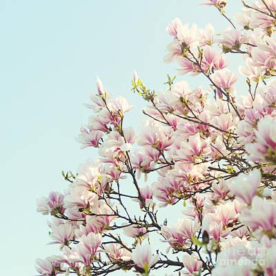 Magnolias Poster by Sylvia Cook