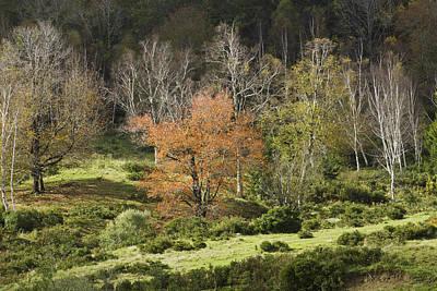 Maine Hillside Landscape In Fall Poster by Keith Webber Jr