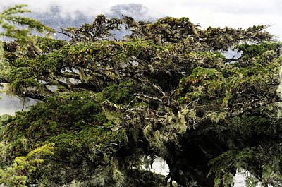 Majestic Branches Poster by Davina Washington