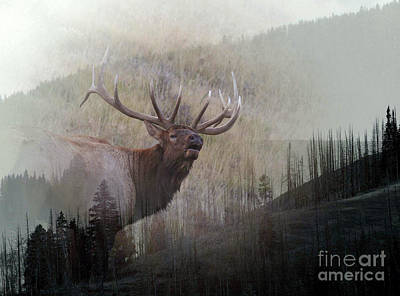 Poster featuring the photograph Majestic Elk by Clare VanderVeen