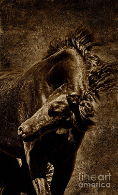 Majestic Friesian On Gold Poster