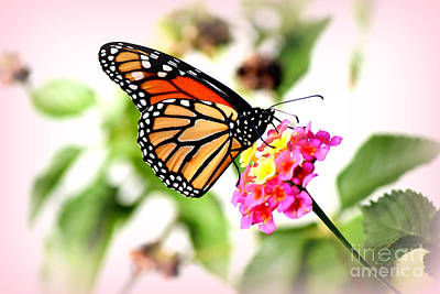 Majestic Monarch Butterfly Poster