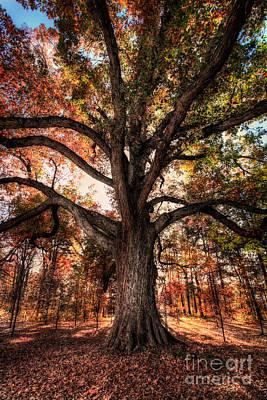Majestic Oak - Autumn In Greensboro I Poster