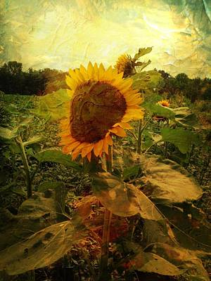 Majestic Sunflower  Poster