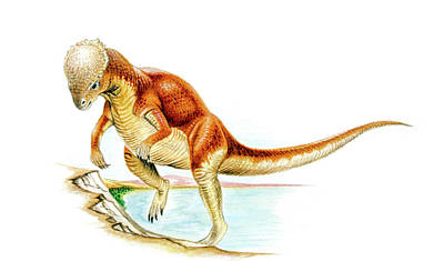 Majungasaurus Dinosaur Poster