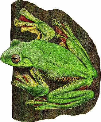 Malabar Gliding Frog Poster by Roger Hall
