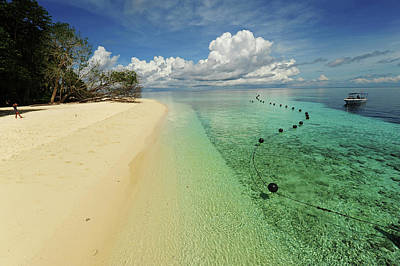Malaysia, Borneo, Semporna Archipelago Poster by Anthony Asael