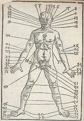 Male Anatomy Poster by British Library