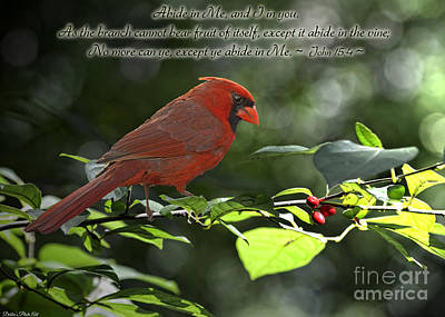 Male Cardinal On Dogwood Branch With Verse Poster