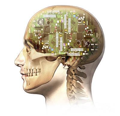 Male Human Head With Skull Poster by Leonello Calvetti