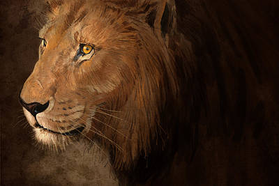 Male Lion Poster by Aaron Blaise