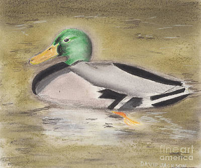 Poster featuring the pastel Mallard by David Jackson