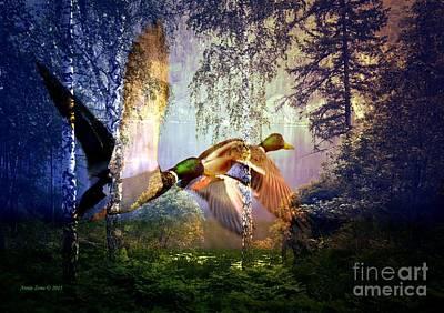 Mallard Ducks Flying To The Lake Poster