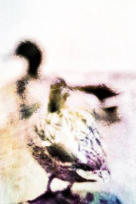 Mallards In Autumn Poster